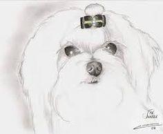 dibujos caras de perros maltes - Buscar con Google