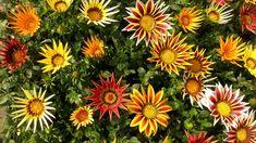 Kvety ktoré môžete vysadiť v marci alebo v apríli a kvitnú celý rok. – radynadzlato.sk