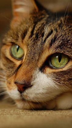 Love Cute Cats (6)