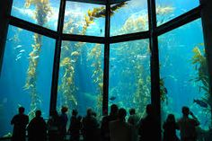The 3rd Grade is traveling to the Monterey Bay Aquarium today! Please pray for safe travel and open minds for lots of learning!