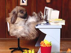 Funny pictures of animals Funny Animal Pictures,funny animals Pictures, funny animals Images, funny animals Photos,Really . Rabbit Wallpaper, Tier Wallpaper, Animal Wallpaper, Funny Rabbit, Funny Bunnies, Cute Bunny, Silly Rabbit, Bunny Pics, Rabbit Hole