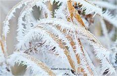 hoar frost - Google Search
