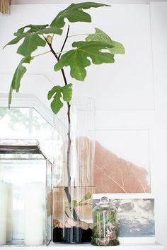 7 typen fruitbomen die je makkelijk in je huiskamer kunt laten groeien. #famme www.famme.nl