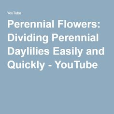 Perennial Flowers: Dividing Perennial Daylilies Easily and Quickly - YouTube