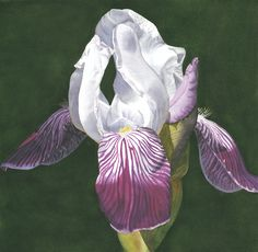 """Illusory Wisdom"", in, Watercolour SOLD Iris Flowers, Watercolours, Flower Art, Raven, Orchids, Wisdom, Floral, Artist, Painting"
