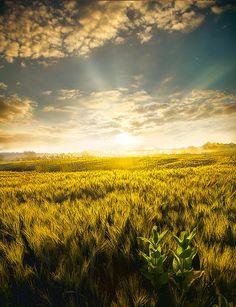 Sunshine on my shoulders makes me happy.....  John Denver ♥