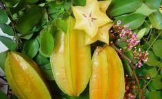 Lacarambole, ce fameux fruit qui contrôle le diabète, diminue le cholestérol … Vous allez en raffoler !<br>http://www.astucesnaturelles.net/carambole-fruit-miracle-controle-diabete-diminue-cholesterol-combat-linflammation/