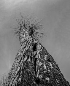 #vsco #vscocam #vscogram #instaphoto #picoftheday #instaday #vscofolk #igers #igersoslo #vscogang #bestofvsco #vscodaily #lifeofadventure #liveauthentic #BW #artsofvisual #visualsoflife #wanderfolk #peoplescreatives #visualarchitects #justgoshoot #letsgosomewhere #exploreeverything  #neverstopexploring #visualsgang #explore #adventure #black&white#tree