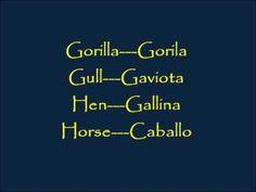 CLASES DE INGLES BASICO #55. VOCABULARIO EN INGLES - ANIMALES