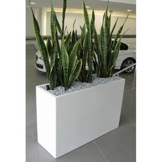 Plant Ideas Frenchams Indoor Plant Hire How Sound Insulations Work Sound insulations are insulating Balcony Plants, House Plants Decor, Plant Decor, Indoor Planters, Outdoor Plants, Pot Jardin, Wood Planter Box, Office Plants, Snake Plant