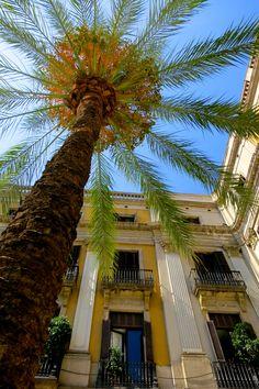 Plaza Real - Barcelona, Spain .     -->Elsie RC