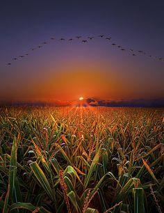 Harvest Migration (von Phil~Koch) :: [via islademaria] :: [Peaceful Eye]