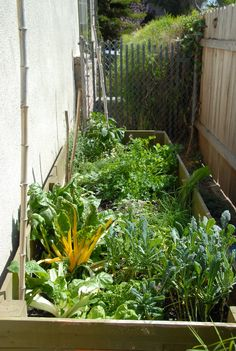 Swiss chard, kale, parsley, peppers, lavendar and more in a small space
