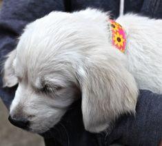 Sunflower Dog Collar / Floral Dog Collar / Ribbon by GreenBeanDog
