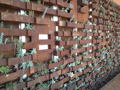 Succulent wall Modern Gardens, Living Walls, Succulent Wall, Succulents Garden, House Projects, Wall Ideas, Wall Design, Wood, Green