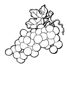 Awesome Grapes Clipart Black and White – yepigames Vegetable Coloring Pages, Coloring Pages For Kids, Leprechaun Clipart, Vine Drawing, Drawings Pinterest, Fruit Clipart, Drawing Clipart, Clipart Black And White, Activities For Kids