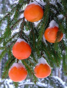 Christmas Decorating with Food, Decoration Ideas for Frugal and Green Holidays Colorful Christmas Tree, Holiday Tree, Christmas Colors, Beautiful Christmas, Christmas Trees, Merry Christmas, Frugal Christmas, Forbidden Fruit, Colorful Fruit