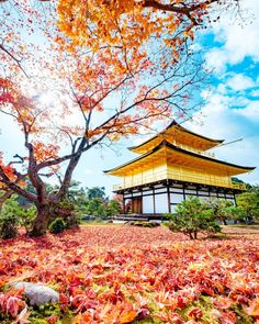 Travel Japan In October Product Filipino Culture, Greek Culture, Japanese Culture, Photos Amsterdam, What Is Culture, Couple Travel, Autumn Instagram, Sea Of Japan, Best Instagram Photos