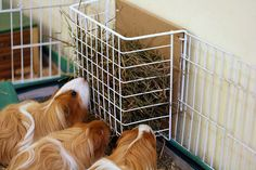 Under-Shelf Storage Basket used as Hay Feeder by acrossthesea, via Flickr