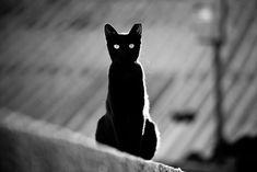 Adoro la elegancia de los gatos negros. Y esos ojos...