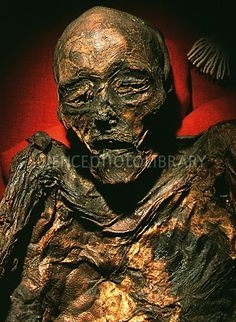 "Mummified head and torso of the Huldremose Woman, a ""bog body"" dated 160 BC to 340 AD. Tollund Man, Bog Body, Egyptian Mummies, Braided Leather, Batman, Around The Worlds, Statue, Superhero, Minis"