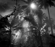 The breathtaking art photography of Hengki Koentjoro. What a way with mist!