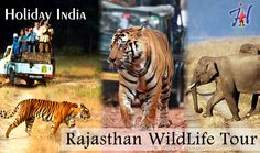 India wildlife tour gives you the experience of One-horned Rhinoceros, Elephants, Leopards and other animal. Feel the experience by your own.