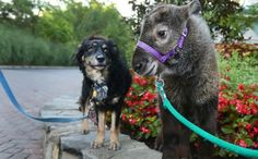 Dog Is A Nanny For Abandoned Zoo Babies, Now He's Best Friends With One Odd Resident