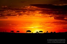 African Sunset with Wildebeest - All I can say for this one is classic Africa. That and I rolled in somethings poo whilst taking it!