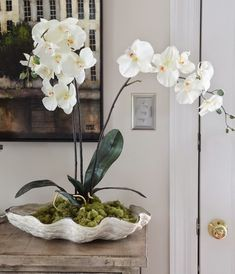 orchid in bowl orchid pots ideas how to choose best orchid pots