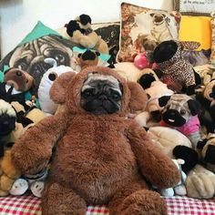 PUG bear dog. He looks so tragic!