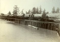 More than 150 logs are pulled across rail supported by short pilings in Marysville. Thousand of images were made of Washington's extractive industries - coal pulled out in cars, salmon piled mountain high and old growth logs. (Photos courtesy of Washington State History Museum). http://www.puyalluptribalnews.net/news/view/click-classical-photographs-from-washington-capturing-the-washington-way-of/