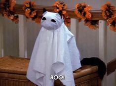 """The 27 Halloween Specials You Need To Watch Before Oct. 31 - Sabrina the Teenage Witch, """"A Halloween Story. Halloween Facts, Fall Halloween, Happy Halloween, Halloween Countdown, Halloween Queen, Halloween 2019, Salem Cat, Salem Saberhagen, Cat Memes"""