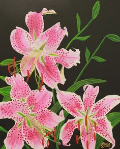 Stargazer Lily Original Acrylic Painting on by LauraWilsonGallery