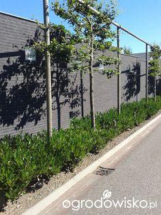 Ogród z perspektywą na przyszłość - strona 277 - Forum ogrodnicze - Ogrodowisko
