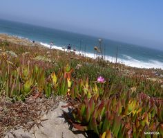 Mariposa w drodze - blog o podróżach: ZACHODNIE WYBRZEŻE