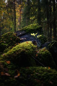 New Nature Green Photography Mystical Forest 16 Ideas Mystical Forest, Walk In The Woods, Parcs, Natural World, Mother Earth, Nature Photography, Photography Classes, Photography Hashtags, Photography Jobs