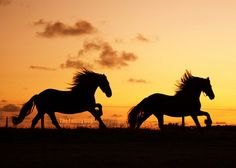 My dream as a little girl, my dreams as I grew older, still my dream now. Me. The love of my life. Two Friesians. The sunset. <3