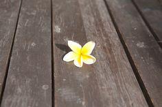 flower, likes her