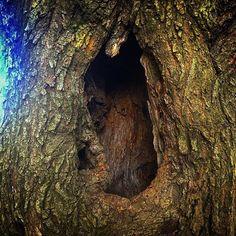 【hoshilongago】さんのInstagramをピンしています。 《何か居そうな穴… #木 #林 #森 #空 #樹木 #枝 #根 #根っこ #大木 #日本 #Tree #forest #sky #tree #branch #root #root #bigtree #tokyo #japan #東京 #公園 #park #駒沢公園》