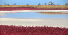 Озеро степь