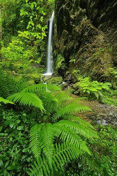 Gorbea tropikala // Gorbea tropical by iban pagalday