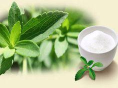 #şeker #otu #stevia #fidesi en uygun fiyata www.e-fidancim.com da