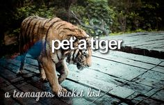 LITERALLY WOULD STOP HERE IF I WAS ABLE TO DO THIS!!!!!!!!!!! I LOVE TIGERS!!!!