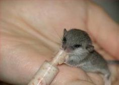 Makes me miss doing wildlife rehab. :(