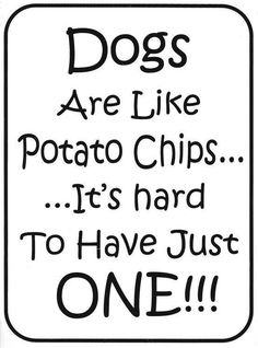 Dogs are like Potato Chips... It's hard to have just ONE!! :)