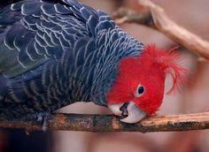 Argue With A Cockatoo Pretty Birds, Beautiful Birds, Australia Animals, Australian Birds, Unusual Animals, Exotic Birds, Cockatoo, Portobello, Cute Baby Animals