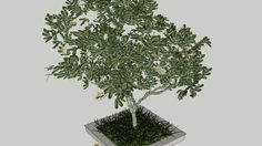 Large preview of 3D Model of cây sứ