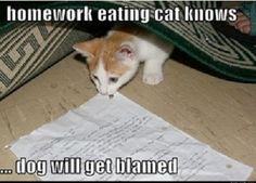 homework eating cat knows... #catoftheday