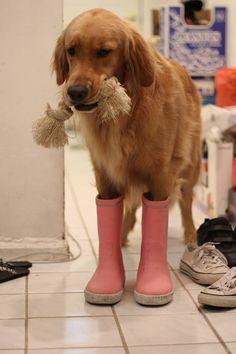 Please...can I go play in the rain? I've got my rain boots on already.